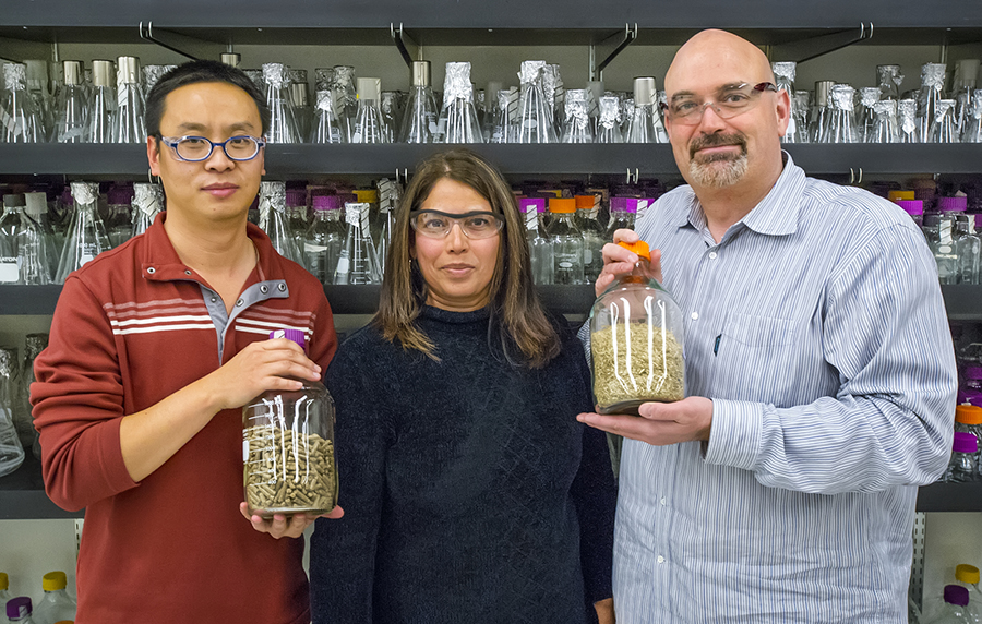 (From left) JBEI's Jian Shi, Seema Singh, and Blake Simmons successfully used an ionic liquid to pretreat mixed blends of biofuel feedstocks, a key to future commercialization. (Photo by Roy Kaltschmidt)