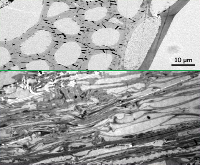 Breakdown: Intact plant cell walls (top) are degraded after 40 minutes of treatment with the ionic liquid 1-ethyl-3-methylimidazolium acetate (bottom). (Image credit: Lawrence Berkeley National Laboratory)