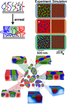 Top Left: Schematic of ternary polymer monolayers. Top Right: AFM images of experimental systems, at different polymer fractions, compared with corresponding SCFT calculations. Bottom: phase diagram.