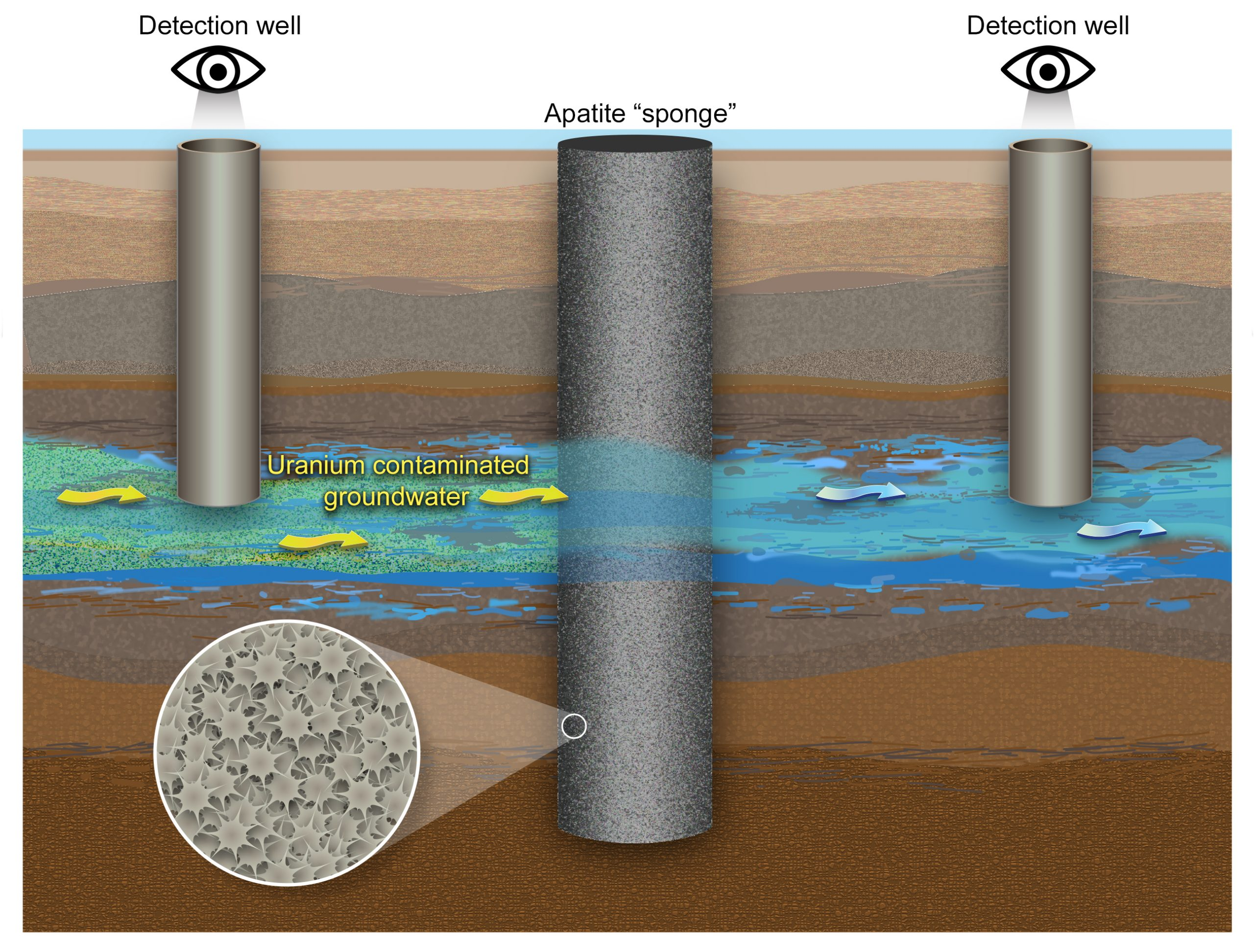 Graphic of underground stream with uranium being absorbed by apatite with detection wells upstream and downstream.