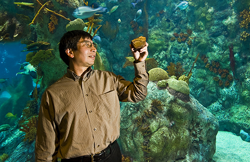 Yifeng Wang holds a piece of banded iron during a visit to an aquarium. Wang and colleagues have proposed an explanation—published in Nature Geoscience—for the precipitation of banded iron deposits in the planet's oceans billions of years ago. (Photo by Randy Montoya)